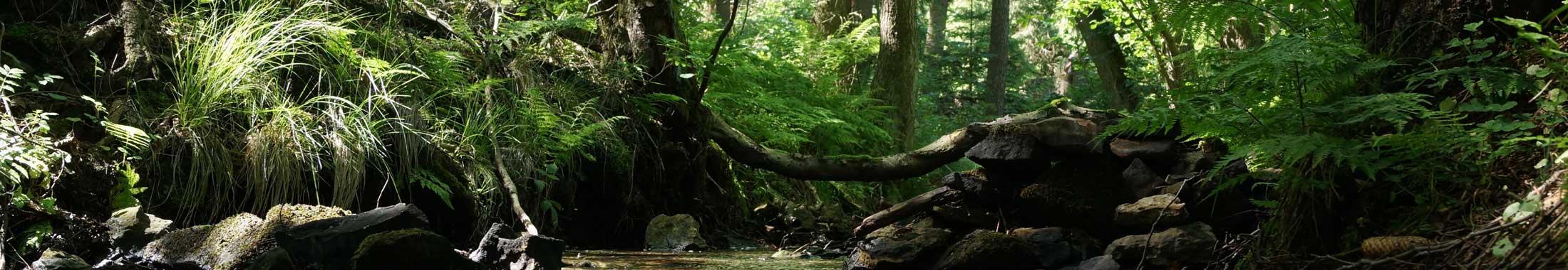 Wälder in Hildesheim