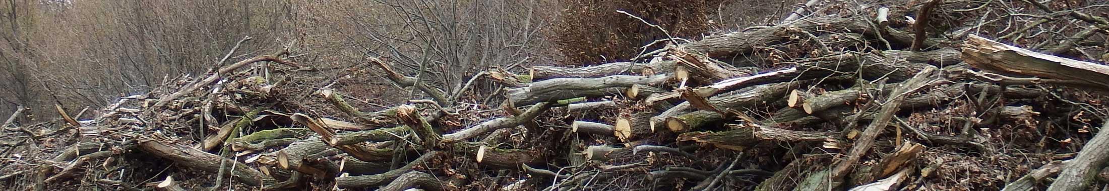 Baumfällungen am Mastberg von Eberhard