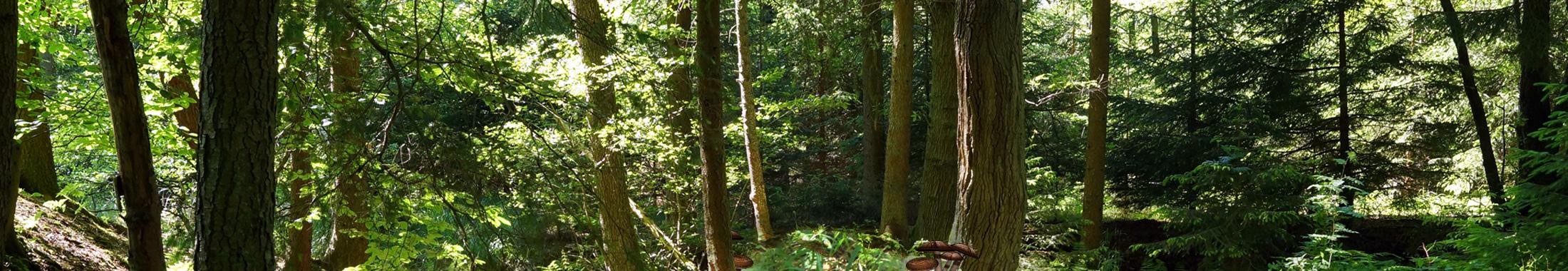 Artenvielfalt im Wald