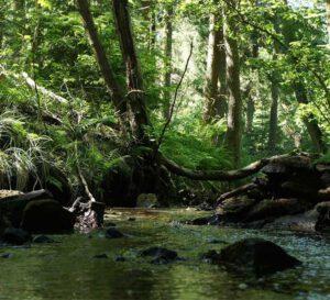 Hildesheimer Wald bei Diekholzen
